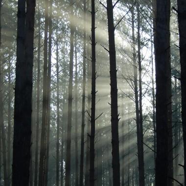 Spadają...z nieba liście złocistejak snyjak marzenia jak moje złudzeniasmutkiwspomnieniałzyspadają...https://www.youtube.com/watch?v=bNvjnvfMe2Y