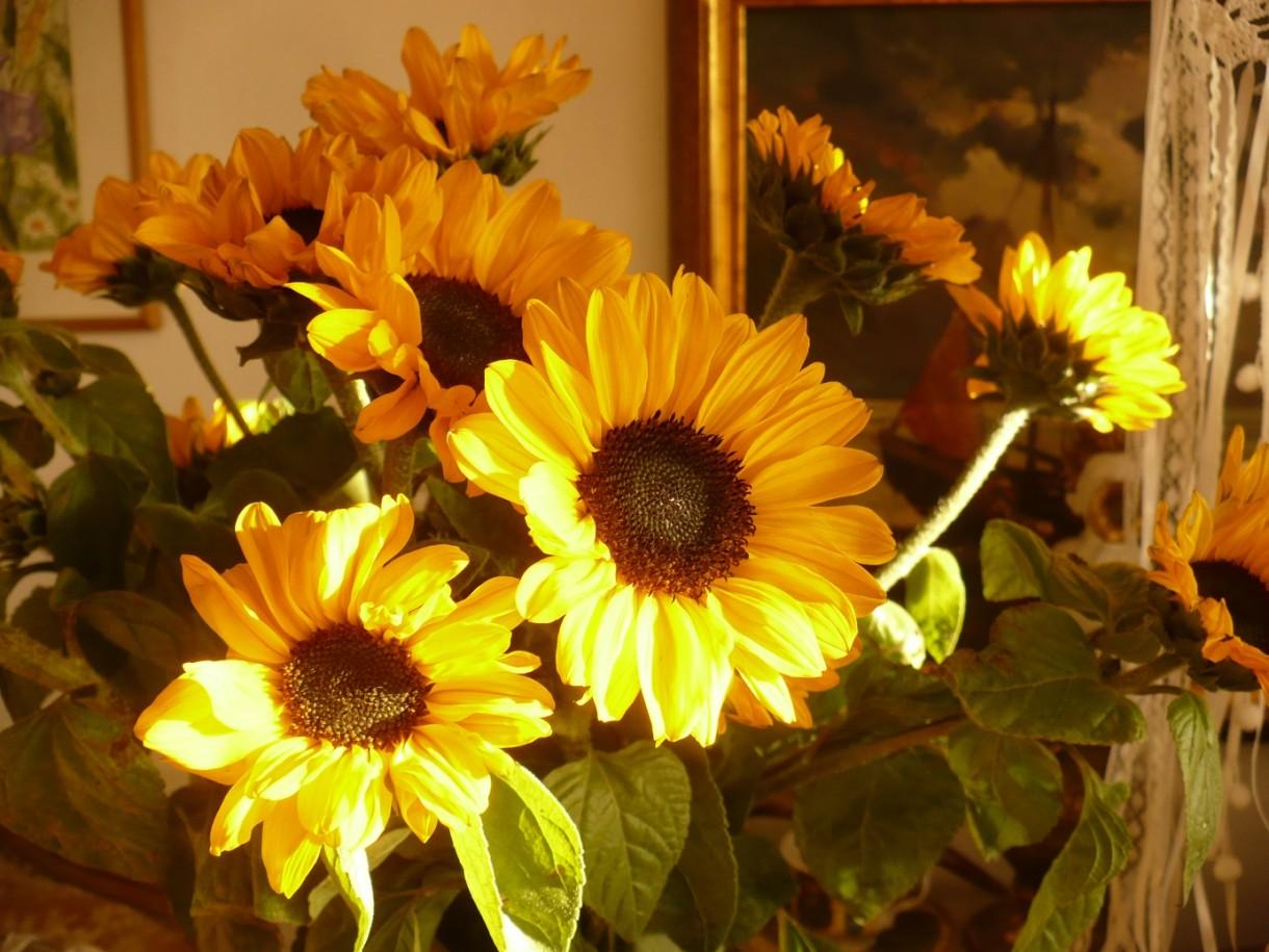 Słoneczny październik...................