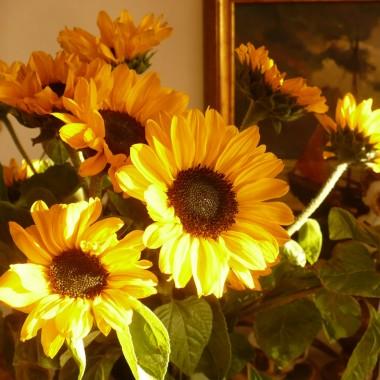 .................i słoneczniki w słońcu............