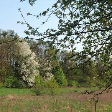 Kwiecień w popołudniowym wiosennym słoneczku ...