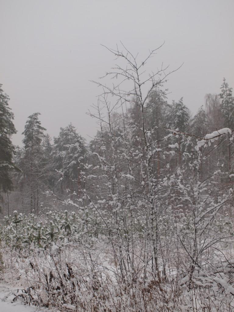 Leśne klimaty, zimowa