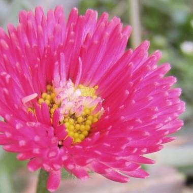 Powoli robię się maniaczką robienia zdjęc makro, szczególnie kwiatów bo są piękne! Próbuję z różnym skutkiem, na pewno nie są to zdjęcia idealne ale na razie takie po prostu są :)Wszystkie roślinki rosną u mnie, łącznie z mleczami ha, ha!