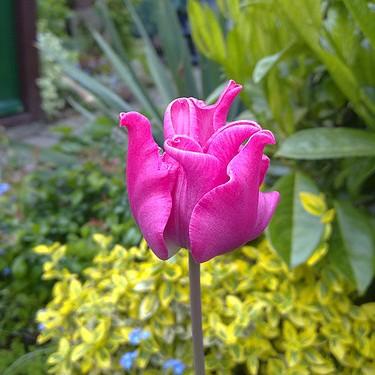 wiosna w ogrodku babci
