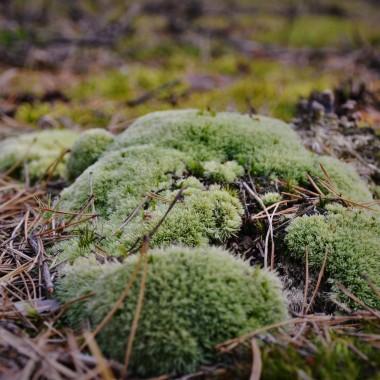Leśne  zbiory  - niestety grzybów nie  było :)