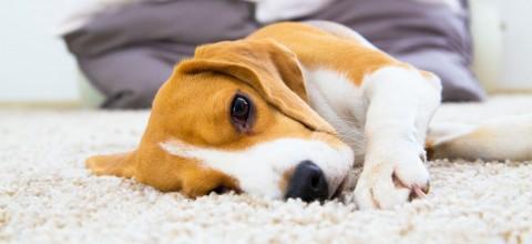 Jak dbać o dywany? Usuwanie plam