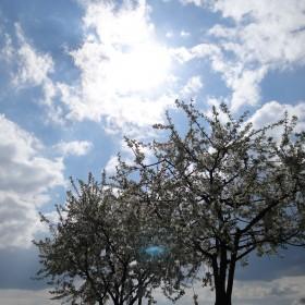 Wielkanoc...wiosenna...w sadzie...
