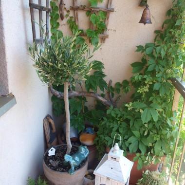 A tak dzisiaj mi słońca brak, wspomnień czar z mojego balkoniku 2016r
