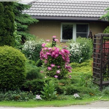 Po tym trejażu pnie się róża od Magnolii.