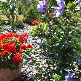 Lato w moim ogrodzie..zapraszam:)