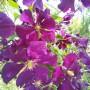 Realizacje, W mini ogródku.