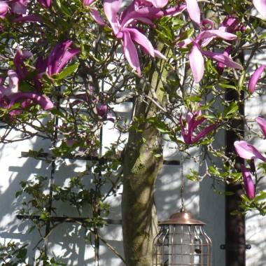 ................i magnolia................