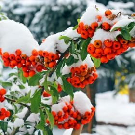 Rośliny, które przetrwają zimę w ogrodzie i na balkonie