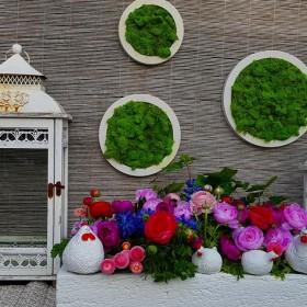 Wiosenne aranżacje do ogrodu -Kobea ogrody i bruki