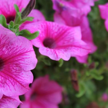 Październik przywitał nas piękną słoneczną pogodą.I chociaż z rana, dach altanki pokryty był szronem, to... nic :)W ogrodzie kwitną jeszcze letnie kwiaty i jesienne już wrzosy, które zagościły też w domu.Zapraszam :)