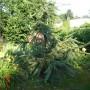 Ogród, Drzewa w moim ogrodzie