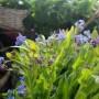 Dekoratorzy, Majowe robótki.................. - ...............a na balkonie zakwitły niezapominajki................moje ulubione majowe kwiatki.........