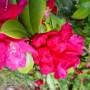 Rośliny, Majowe radości................... - ...................i rododendron.............