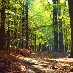 Góry Świętokrzyskie jesienią
