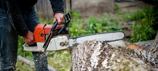Od lipca 2017 nowe stawki opłat za usunięcie drzew i krzewów