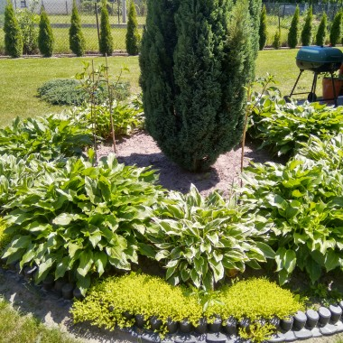 Ogród.