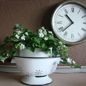 Nowe kwiatki na tarasie