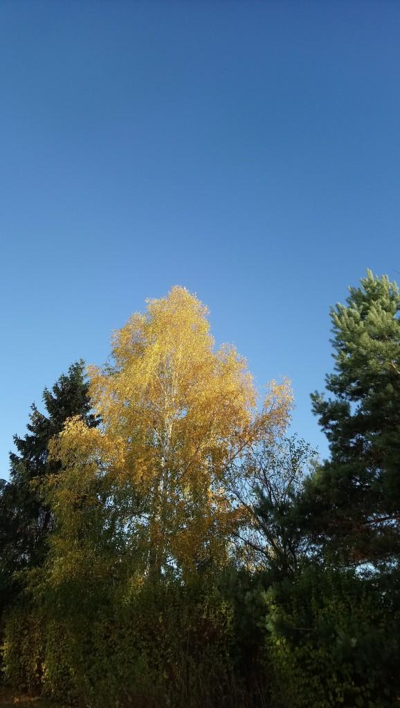 Ogród, Już listopad ............. - ...............i jesienne drzewa..................