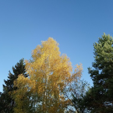 ...............i jesienne drzewa..................