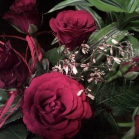 róże są czerwone :)