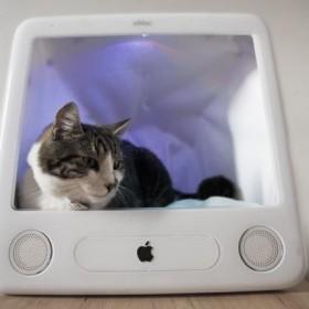 Esleeper – nowoczesna buda dla kota