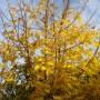 Pozostałe, Listopadowe małe radości................ - ...............i złote liście na klonie................