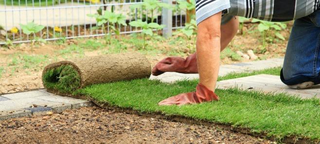 Trawiasty dywan. Jak założyć trawnik z rolki?