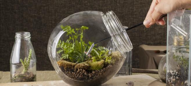 Rośliny antysmogowe oczyszczą powietrze w twoim domu