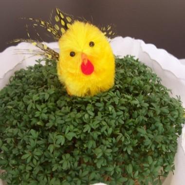 Wielkanoc tuż, tuż ...... a moja jest kolorowa :)