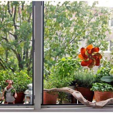 Moje okno na Świat
