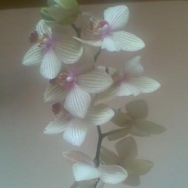 fotki rozne rozniste