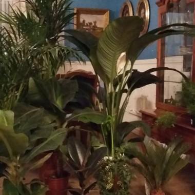 Moja zielenina przed rozstawieniem jej po kątach :D