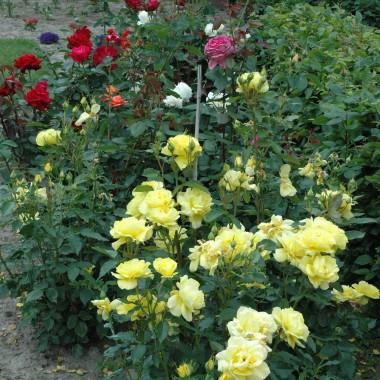 Moj Ogród