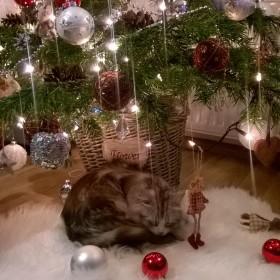 zrobiło sie świątecznie