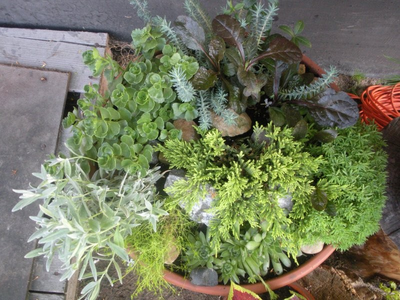 Rośliny, moje kochane roślinki - mój miniskalniak