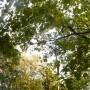 Rośliny, Złoto jesieni i moje zielone bombki..... - ...............i zielono ........i złoto..............
