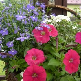 Ogród 2012 rok