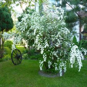 Ogród latem
