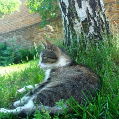 Nasz generał odpoczywa pod brzozą :)