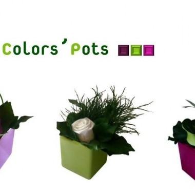 Nowości FlowerBox
