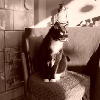 Koty cz.1 - w moim domu.