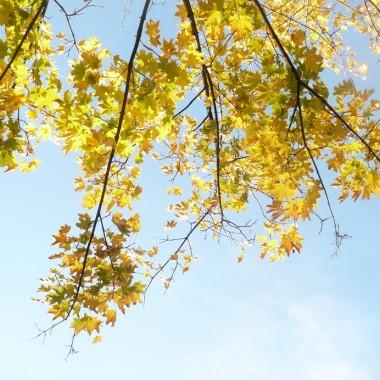 ..................jeszcze są  złote liście na drzewach................