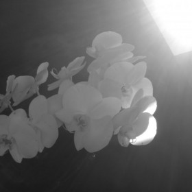 roślinki :)