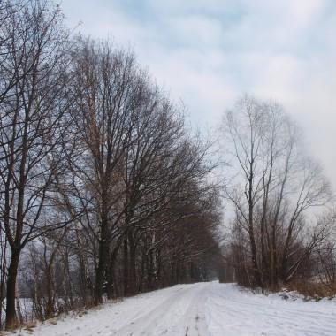 Pstryki z zimowego spaceru, miały być se słońcem ale zaszło za chmury, gdy się wybraliśmy, więc chociaż takie popołudniowe, zapraszam.