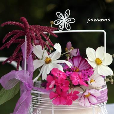 kosmosy lub onętki, jak kto woli, moje jedne z  ulubionych kwiatuszków jednorocznych, bardzo wdzięczne i piękne