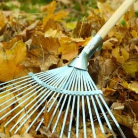 Jesień w ogrodzie: Co zrobić z opadłymi liśćmi?